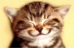 kat2 lachend