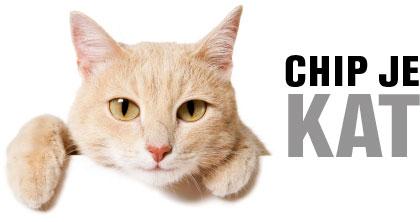 kat chip