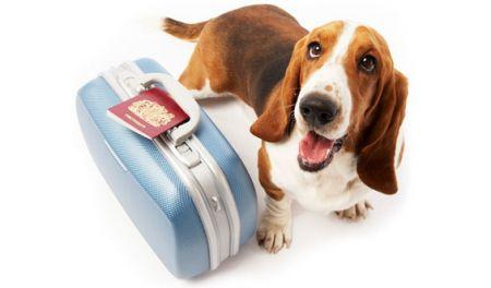 vakantie-met-hond3