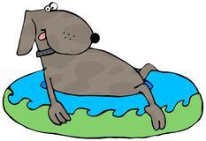 hond-een-pool-kiddie-7562191