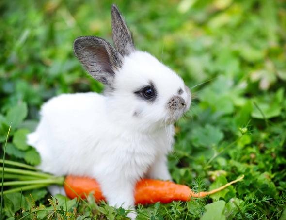 Afbeeldingsresultaat voor konijn vaccineren