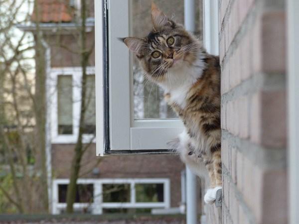 lexie-cleo-uit-raam